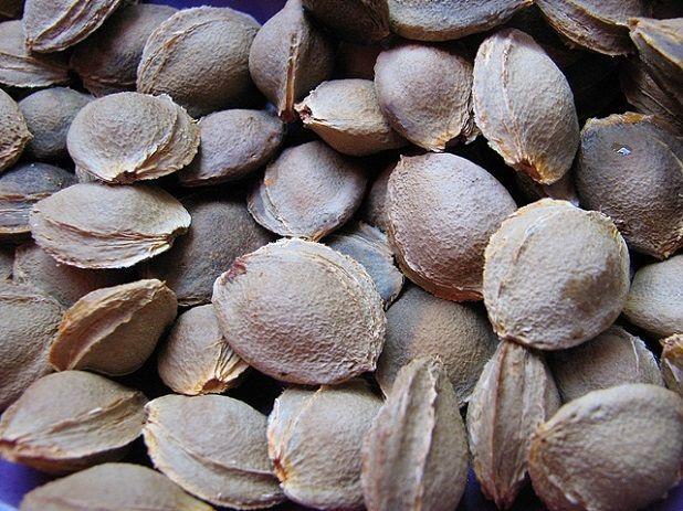 Kostochka-abrikosa