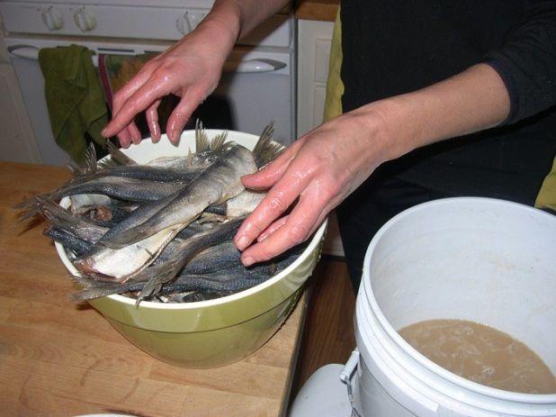 Соление рыбы