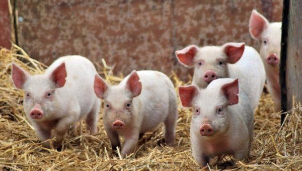 Селекция и генетика животных