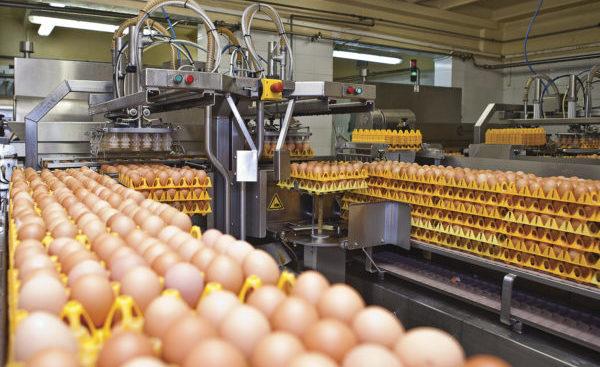 Технология производства продуктов животноводства