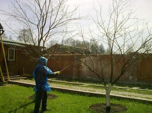 опрыскивание дерева мочевиной