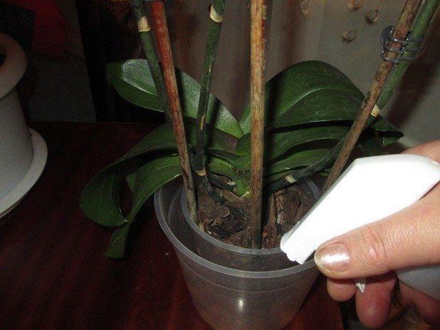Лечение орхидей