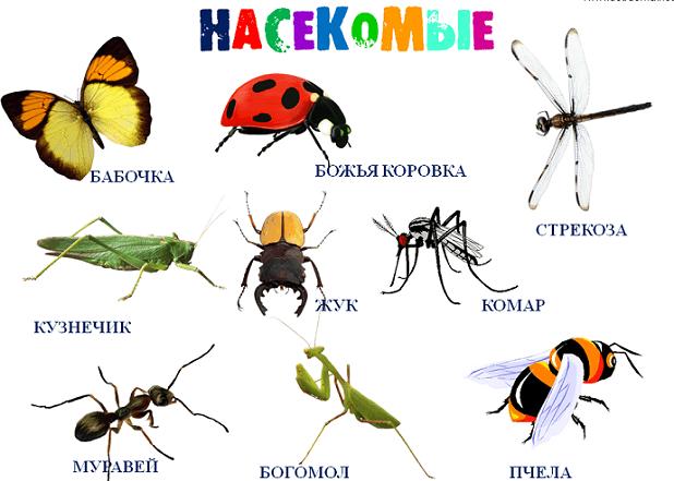 насекомые