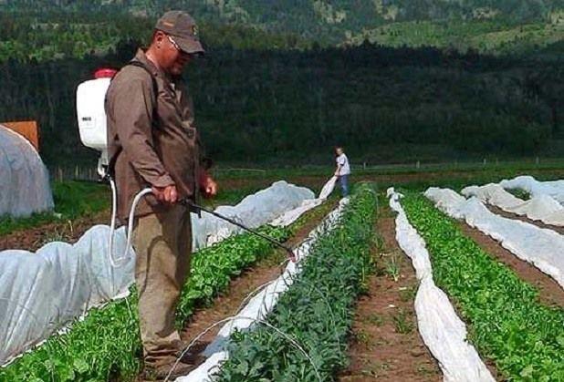 опрыскивание овощей