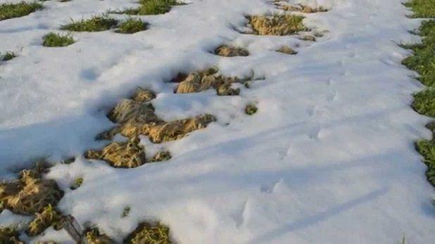 сидераты зимой