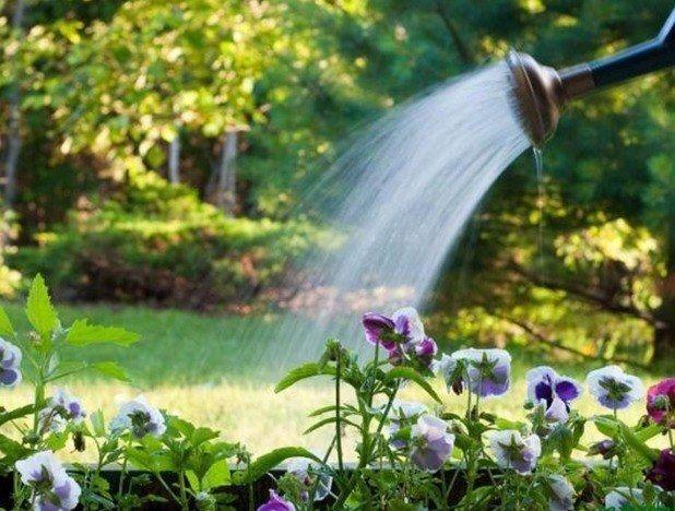удобрения в воде