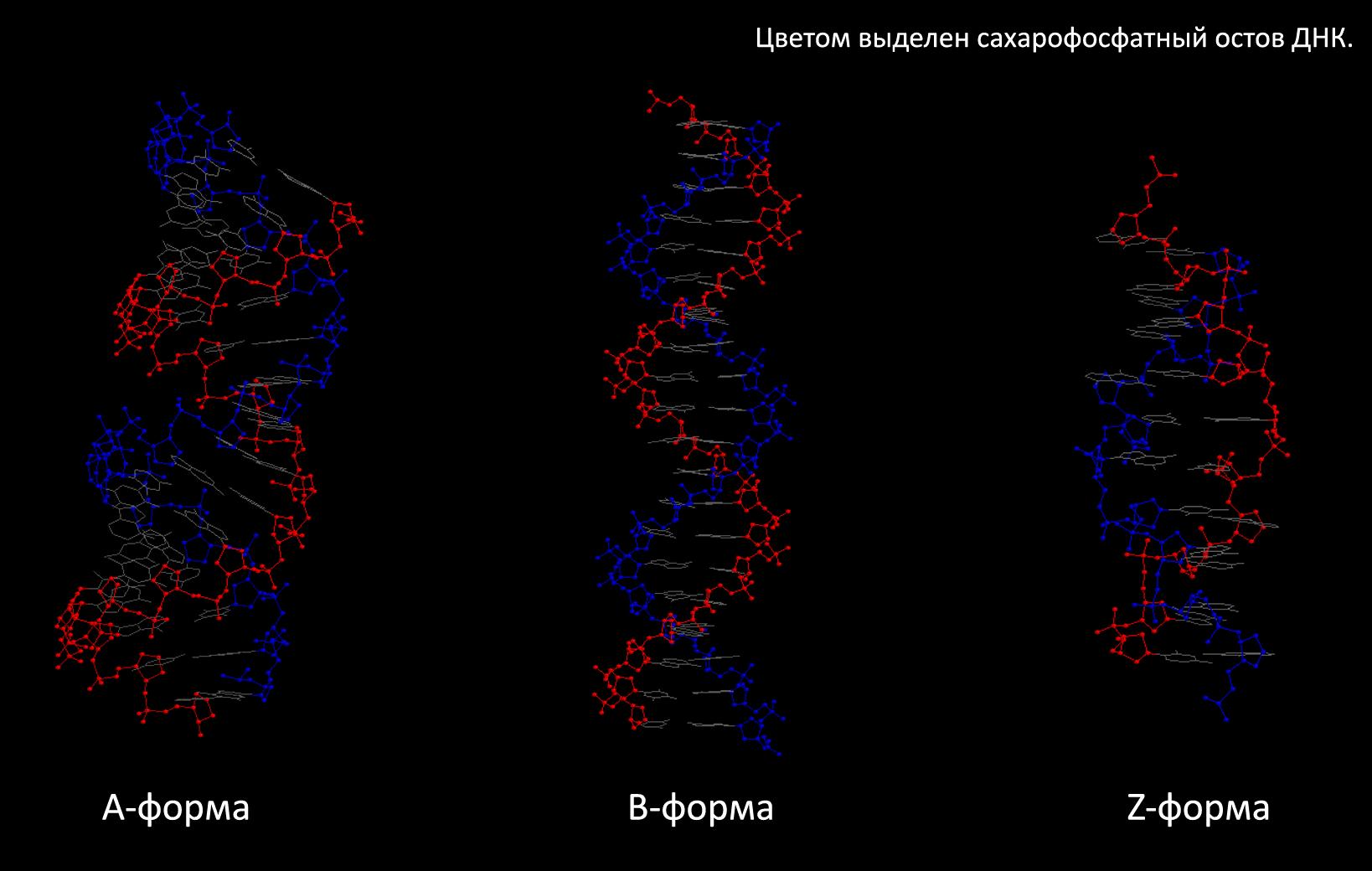Сахарофосфаты