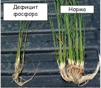 Влияние дефицита фосфора на растения