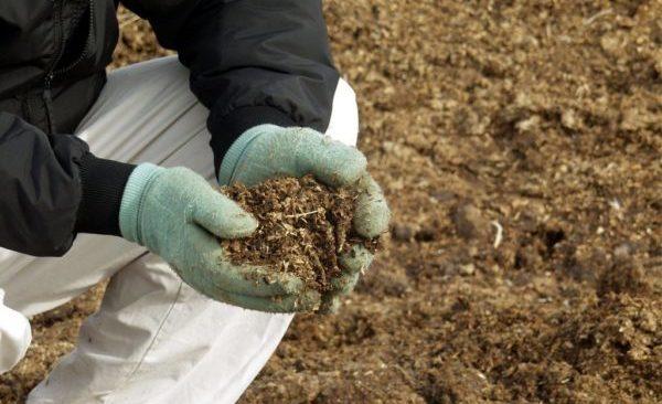 Удобрения для сада и огорода