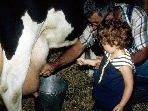 как доить корову
