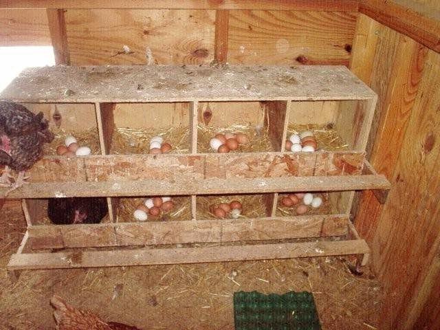 Гнезда для кур несушек в курятнике
