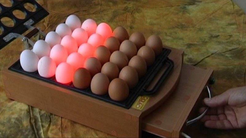 инкубатор для цыплят