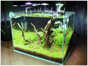 аквариум на 20 литров
