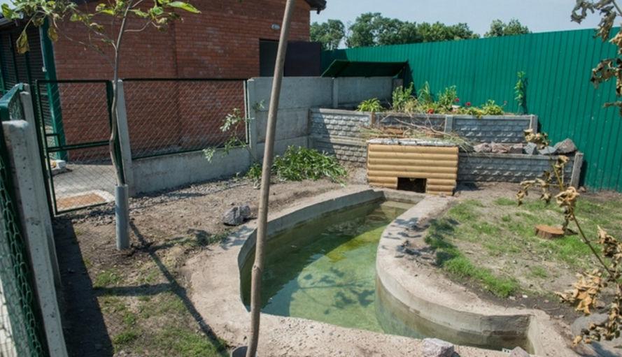 Место содержания бобров должно быть оборудовано водоемом