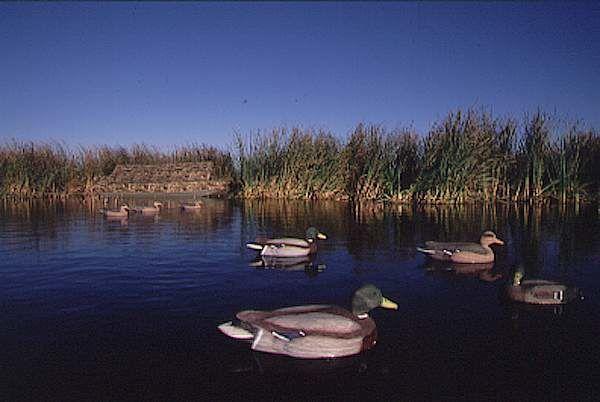 Искуственные утки на воде