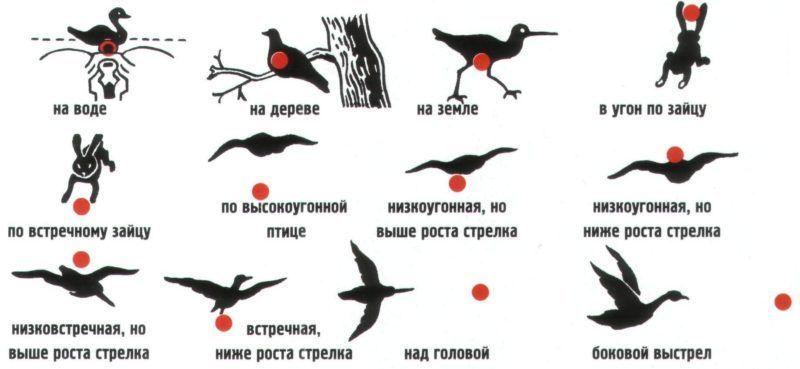 Как целиться в птицу