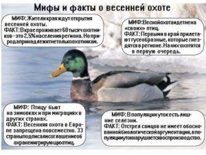 Мифы и факты о весенней охоте