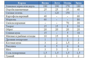 Нормы и рацион кормления уток родительского стада в зависимости от времени года