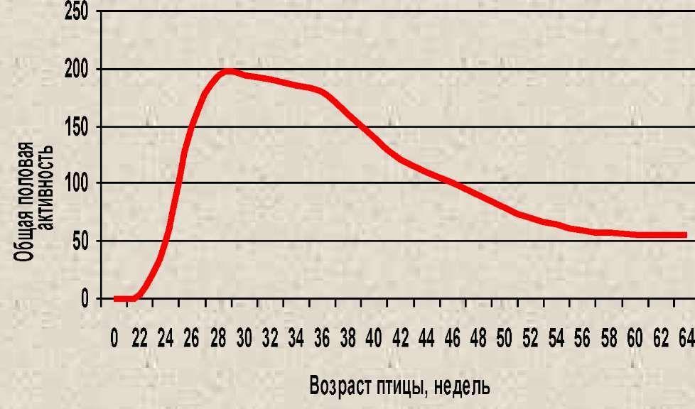 Общая (средняя) половая активность сельскохозяйственной птицы