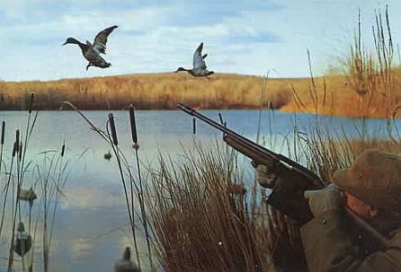Охота на уток с подхода