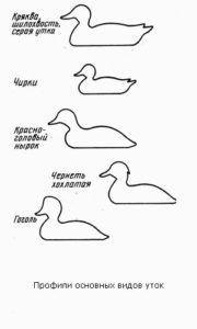 Профили основных видов уток