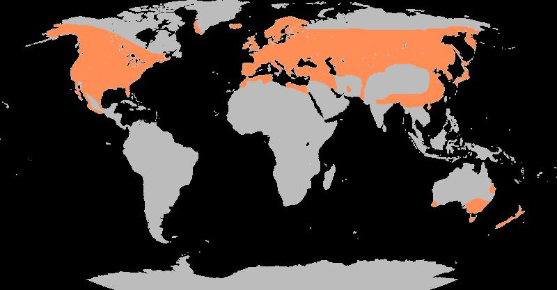 Ареал обитания кряквы