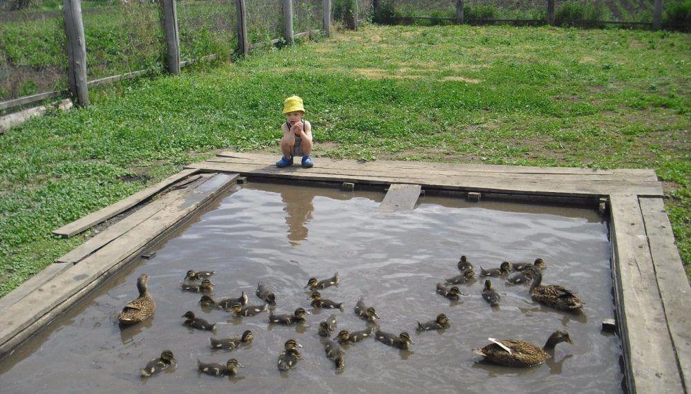 Двор с бассейном для подсадных