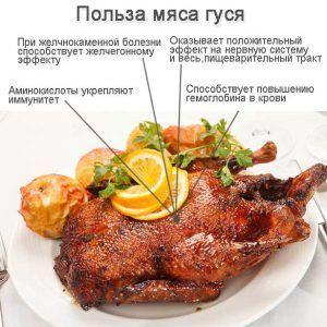 Мясо гуся имеет небольшие отличия по содержанию жиров