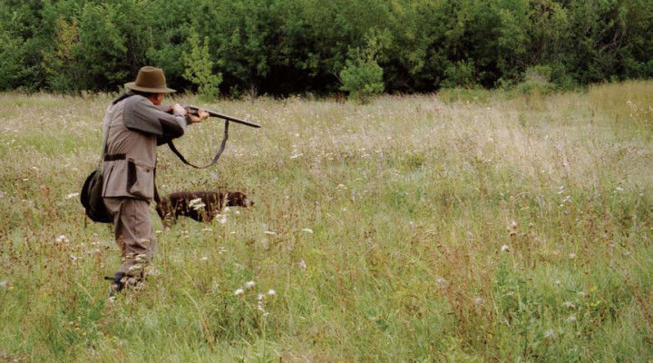 Охота летом