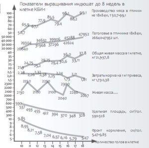 Показатели выращивания индюшат до 8 недель