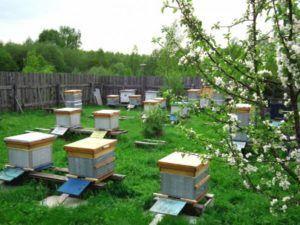 Сад с цветущими деревьями идеальное место содержания пчел