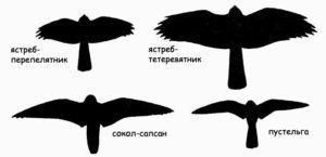 Силуэты хищных птиц