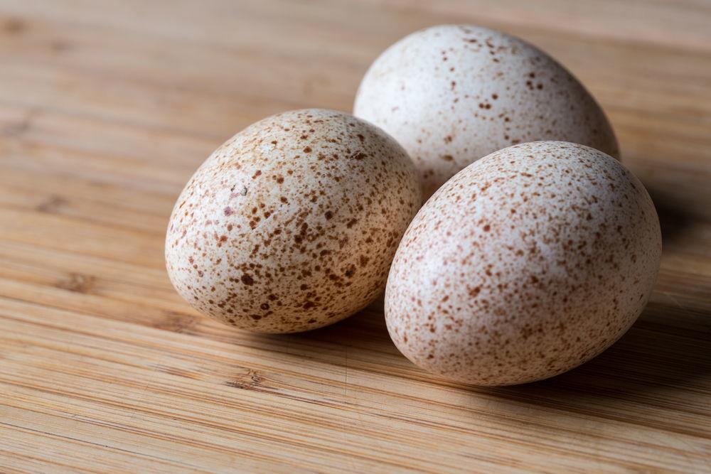 Яйца индюшки