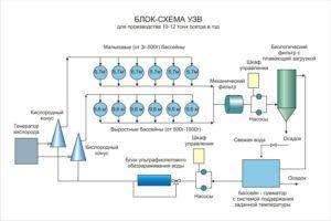 Блок-схема УЗВ для выращивания осетра