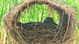 Гнездо-корзинка