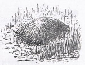Гнездовой шалаш из осоки для уток