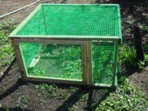 Клетка для содержания индейки во дворе