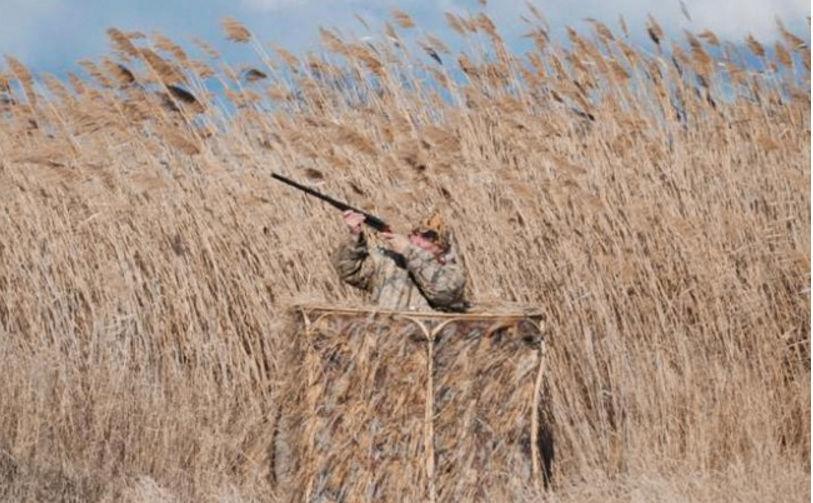 Лучшее время для охоты на фазана из засидки будет утро или вечер