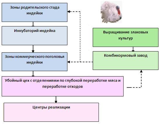 Создание птицекомплекса