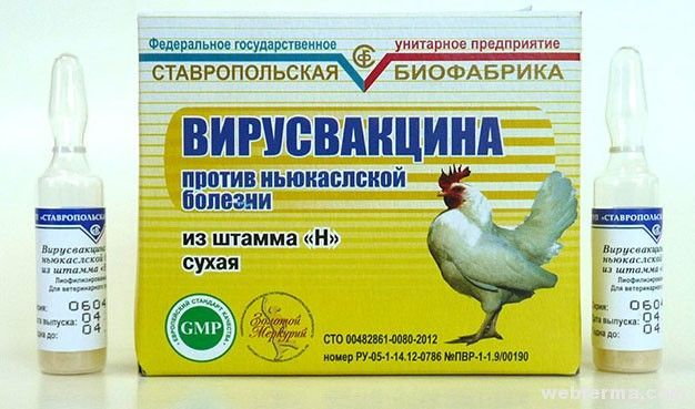 Сухая вирусвакцина Ставропольской биофабрики против ньюкаслской болезни