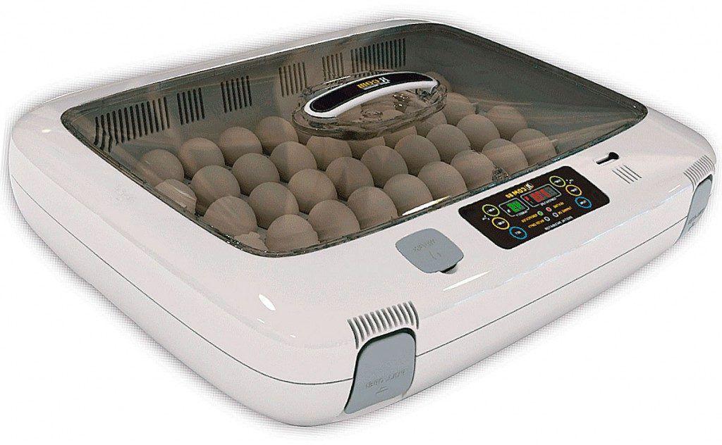 Если утка несет яйца но не садится на них, можно использовать мини инкубатор