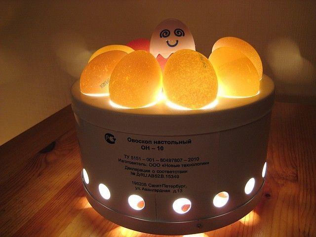 Оценка качества яиц при просвечивании