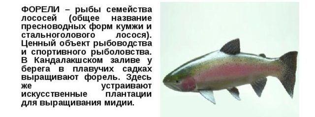 Краткое описание о рыбе форель