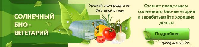 баннер био-вегитарий
