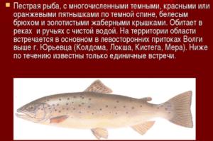 Пестрая рыба