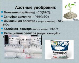Азотные удобрения для лиатриса
