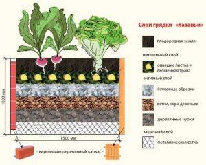Правила подготовки почвы для грядки