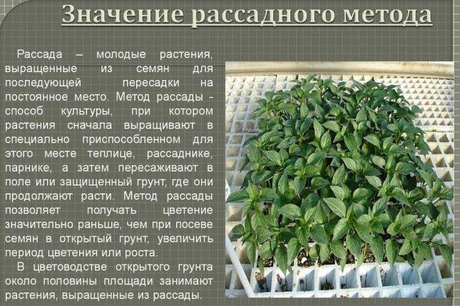 Способы выращивания растения в грунте