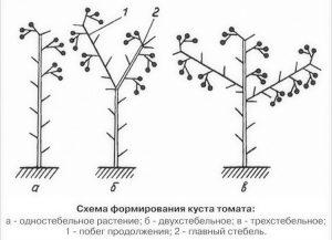 Схема формирования куста томата