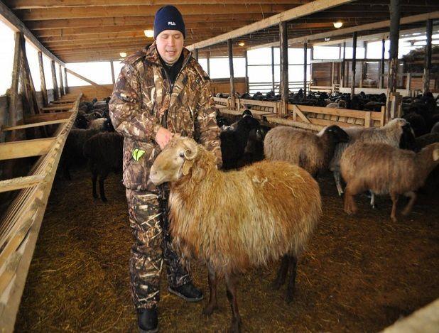 Овцехозяйство